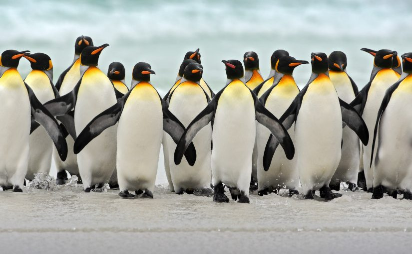 Introducing the Penguin Awards (the Digital Marketing awards nobody asked for!)
